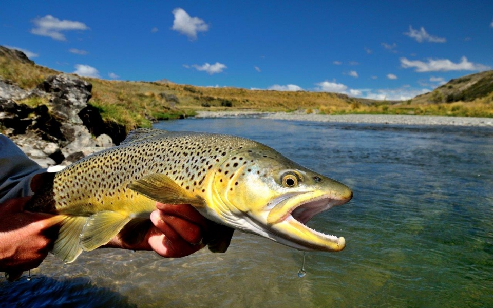 Useful links fishing guides nz for New zealand fly fishing